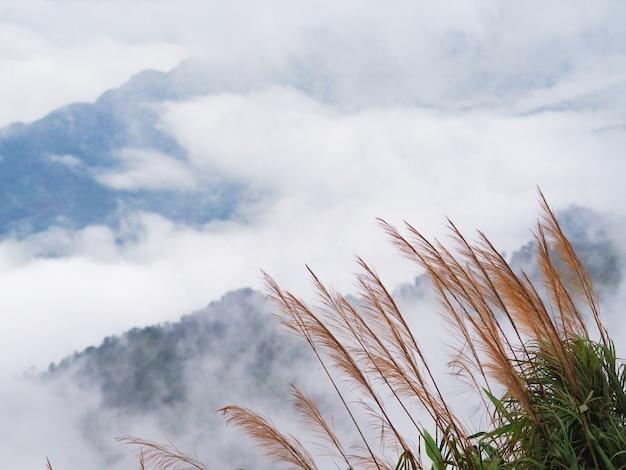 Flor de hierba silvestre y hojas verdes en la montaña sobre blanco niebla en el fondo del cielo