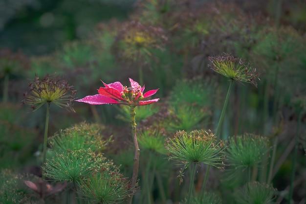Flor con hojas rojas en un jardín bajo la luz del sol con vegetación