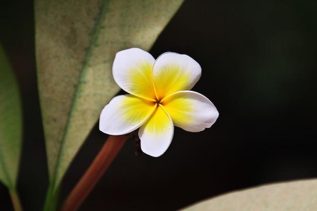 Flor en la isla prisión de zanzíbar, tanzania