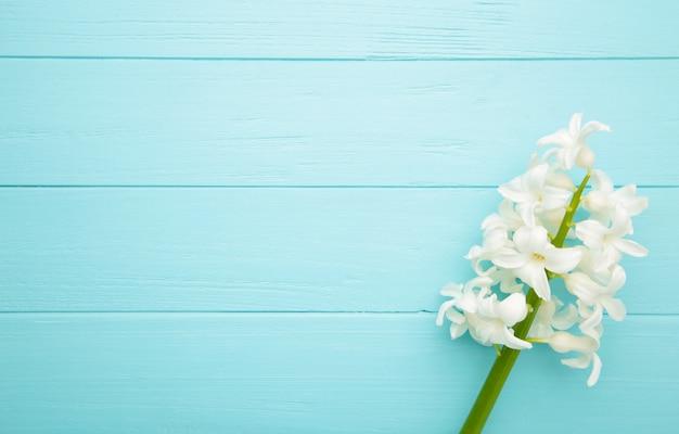 Flor de jacinto blanco sobre un fondo azul.