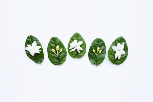 Flor de jazmín con hojas en blanco