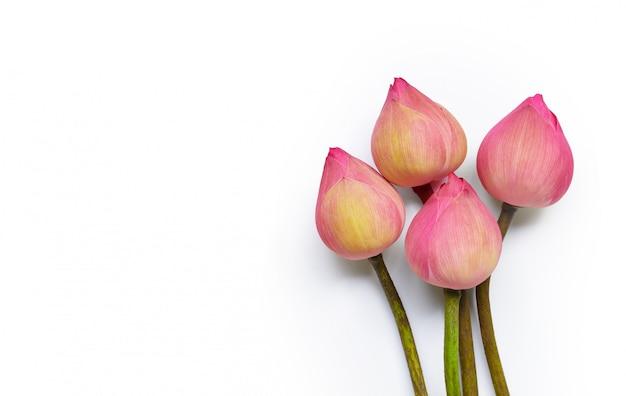 Flor de loto rosa en mesa blanca.