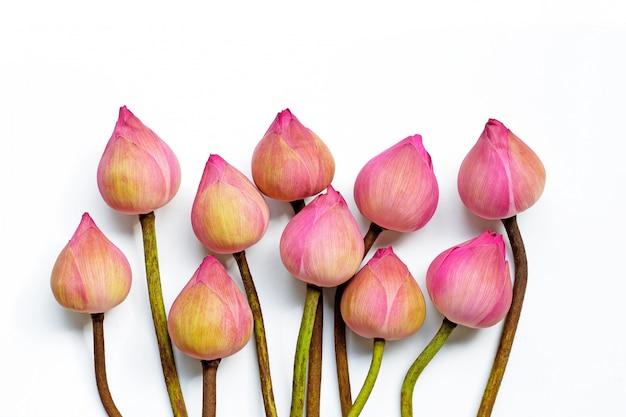 Flor de loto rosa sobre superficie blanca