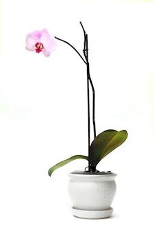 Flor en una maceta