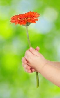 Flor en manos