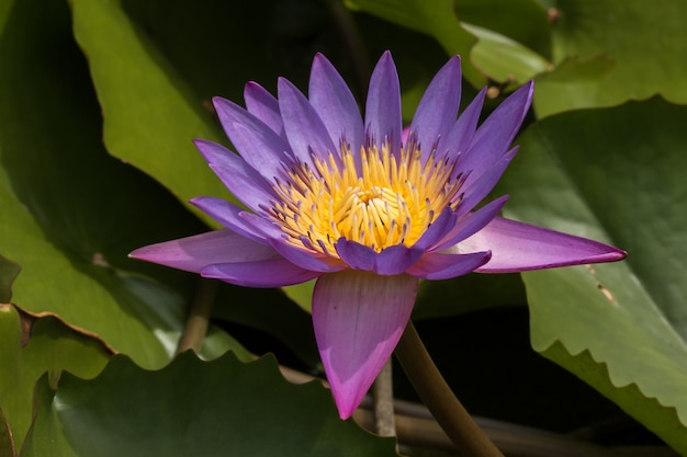Flor morada en un jardín botánico