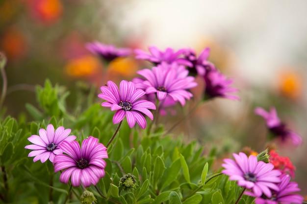 Flor morada en el jardín en primavera y verano