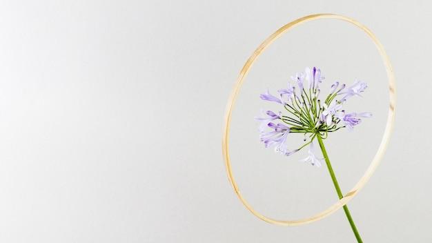 Flor morada con marco dorado