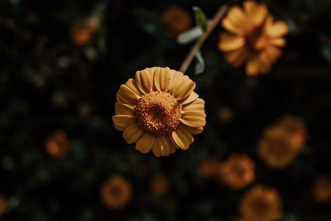 Flor naranja y amarilla cambiante