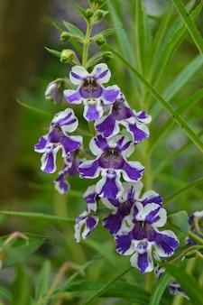 Flor de orquidea azul en el jardin