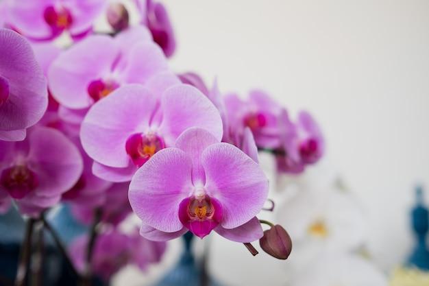 Flor de orquídea, flor hermosa naturaleza