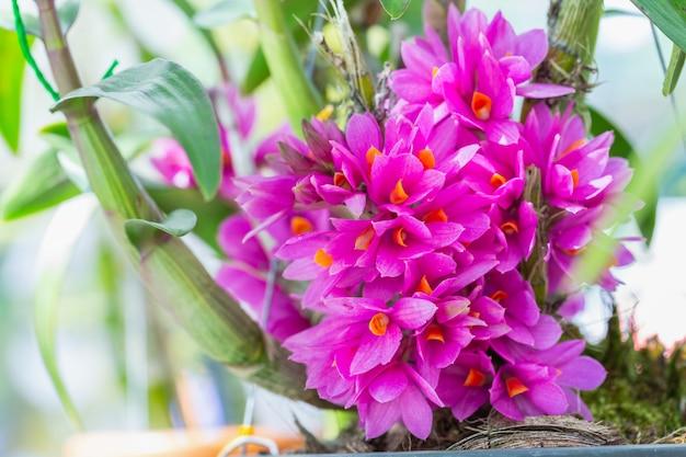 Flor de la orquídea en el jardín en invierno o día de primavera.
