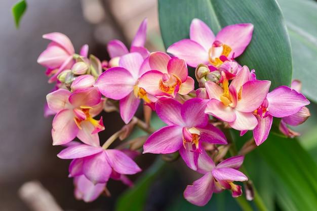 Flor de la orquídea en jardín de orquídeas