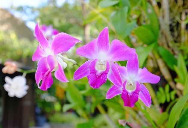 Flor de orquídea en el jardín.