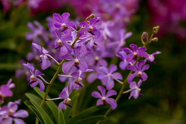 Flor de orquidea morada