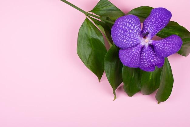 Flor de orquídea púrpura sobre un fondo rosa pastel