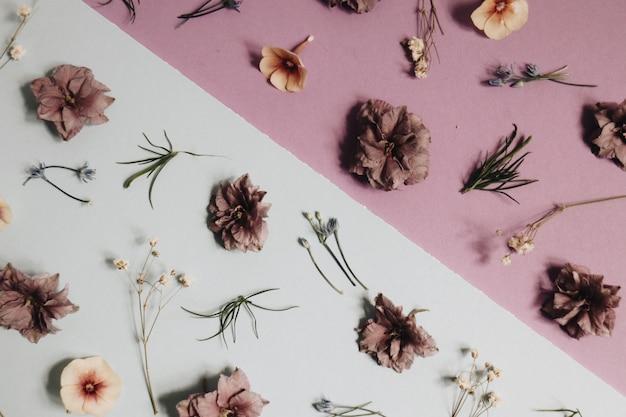 Flor pelada y tallo sobre superficie blanca y rosa