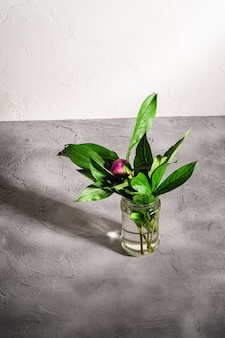 Flor de peonía rosa con hojas verdes en frasco de vidrio con agua