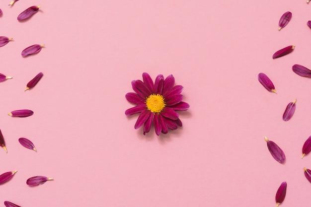 Flor pequeña con pétalos en mesa rosa.
