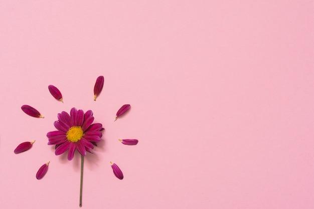 Flor pequeña con pétalos en mesa.