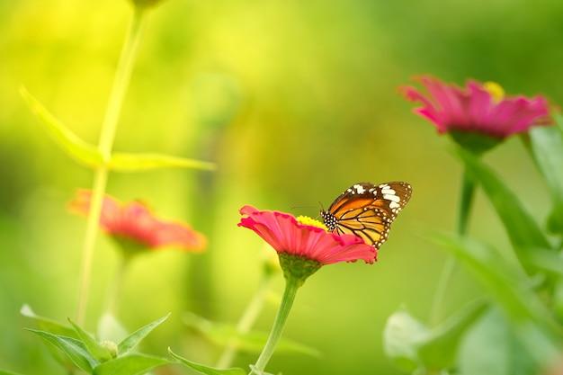 Flor de pétalos de rosa con mariposa en tallo sobre fondo borroso