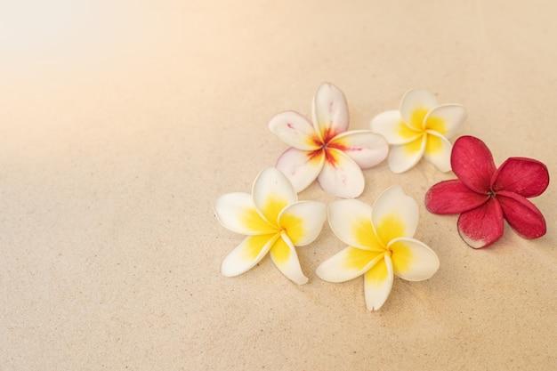 Flor plumeria en el fondo de la playa de arena
