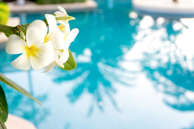 Flor de plumeria en piscina