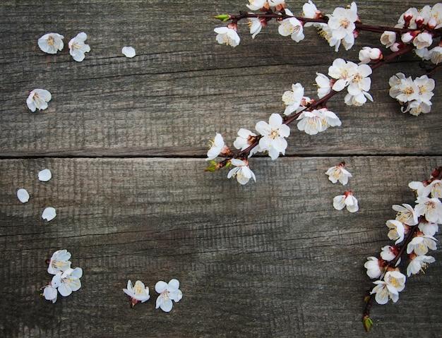 Flor de primavera albaricoque
