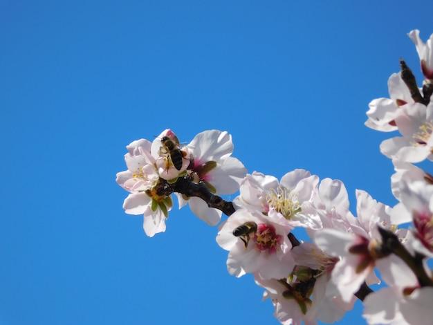 Flor de primavera