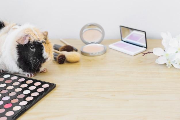 Flor; productos cosméticos y guinea en el escritorio de madera