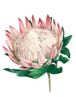 Flor protea descubierta con hojas verdes
