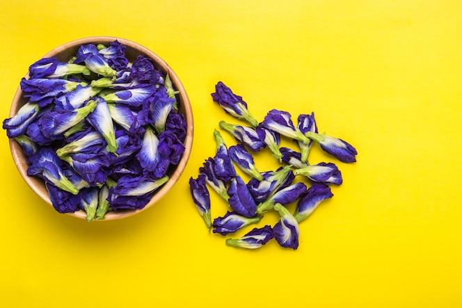 Flor púrpura fresca del guisante de mariposa en fondo amarillo. concepto de comida o hierba