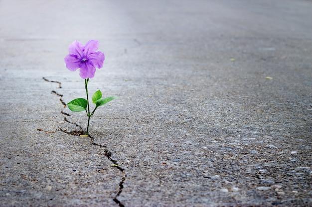 Flor púrpura que crece en la calle de la grieta, foco suave, texto en blanco