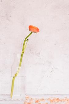 Flor de ranúnculo naranja en botella de vidrio