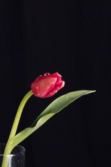 Flor roja aromática fresca con hojas verdes en rocío en jarrón.