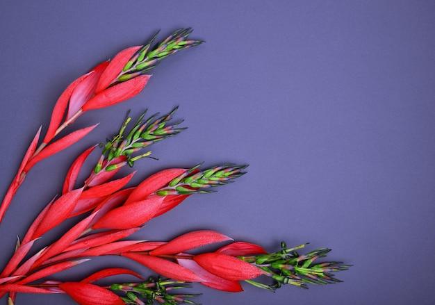 Flor roja billbergia
