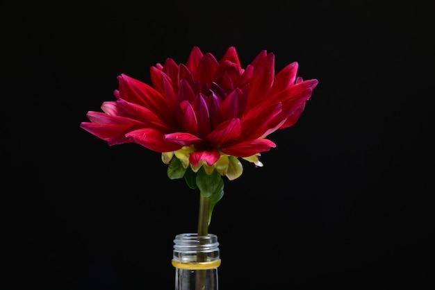 Flor roja en una botella con una pared negra