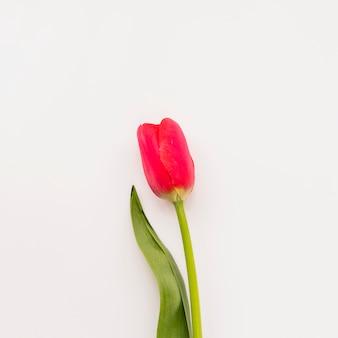 Flor roja fresca en tallo