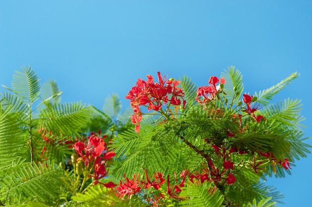 Flor roja de hoja verde en el cielo azul