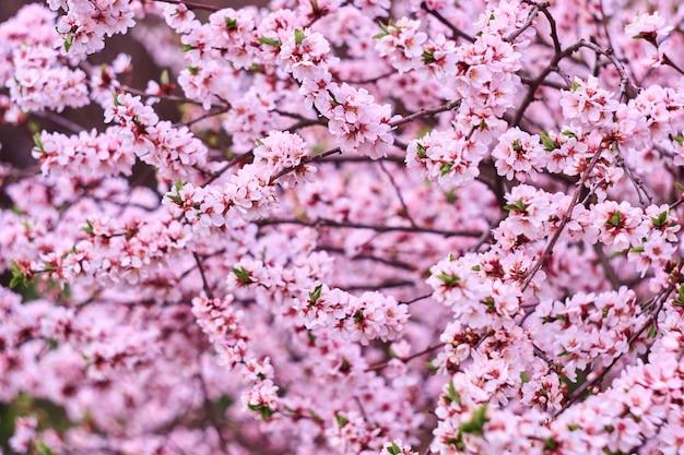 Flor rosa árbol en la naturaleza