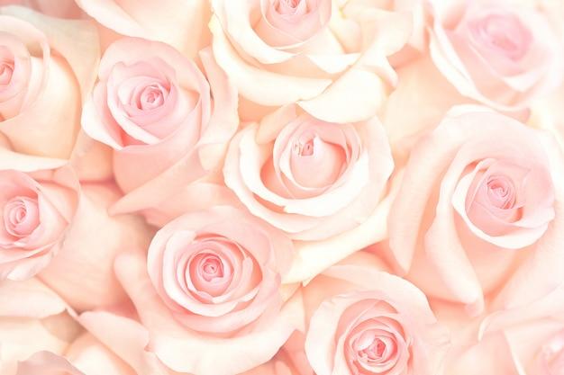 Flor rosa coral. retoque detallado