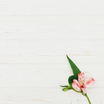 Flor rosa en mesa de madera