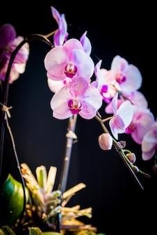Flor rosa orquideas