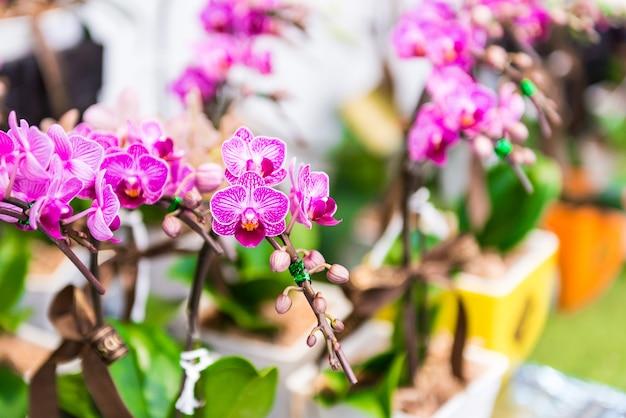 Flor rosa de las orquídeas