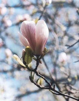 Flor rosa en la rama de un árbol rodeado de otros