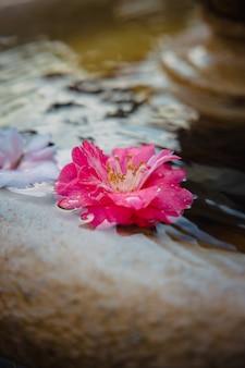 Flor rosa sobre arena blanca