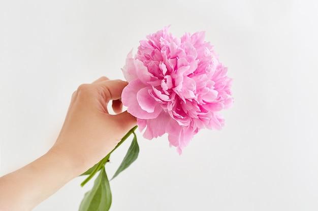 Flor rosada fresca de la peonía en la mano de la muchacha.