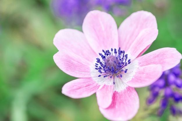 Flor rosada hermosa del primer en fondo borroso