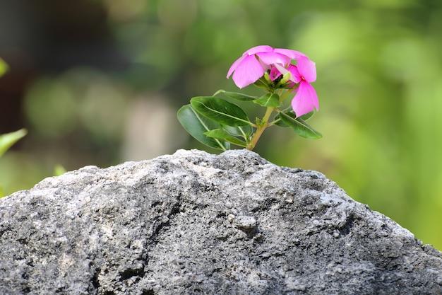Flor rosada en una roca.