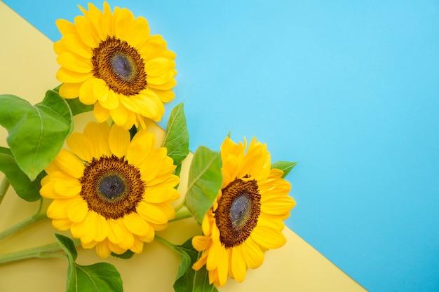 Flor del sol aislada sobre una bandera ucraniana. pequeños girasoles brillantes sobre fondo amarillo y azul.